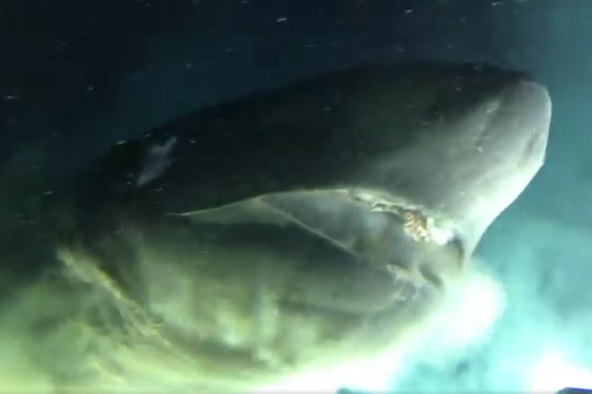 Vidéo - Des Chercheurs Ont Tracé Un Mystérieux Requin À avec Requin Jeux Video