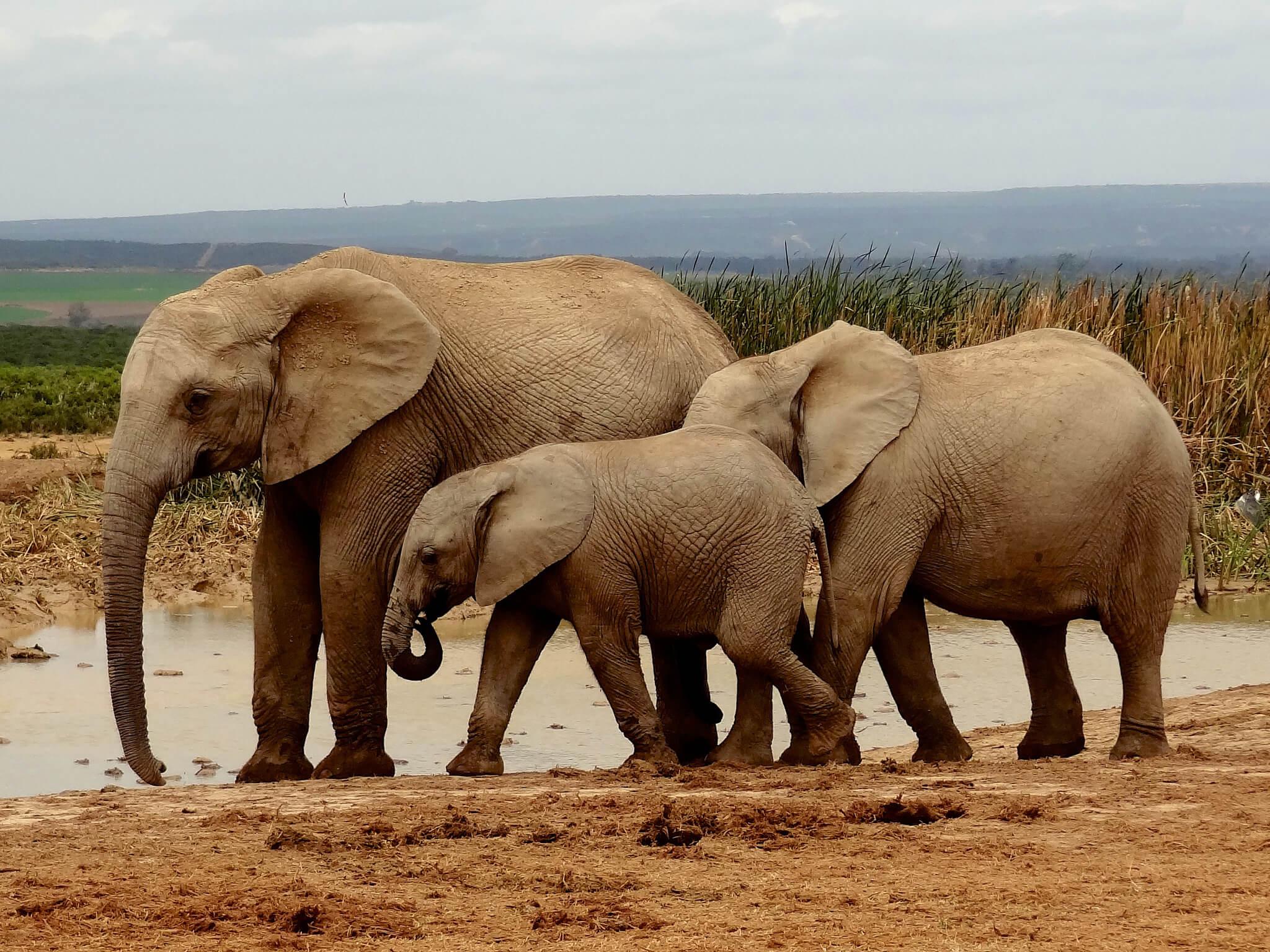 Voir Des Animaux En Afrique Du Sud : Quelle Réserve Ou Parc ? tout Les Animaux De L Afrique
