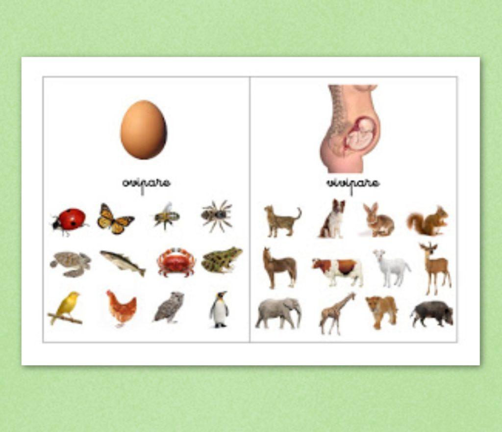 10 Manières D'aborder Les Animaux En Maternelle - 1,2,3 à Animaux Maternelle Activités