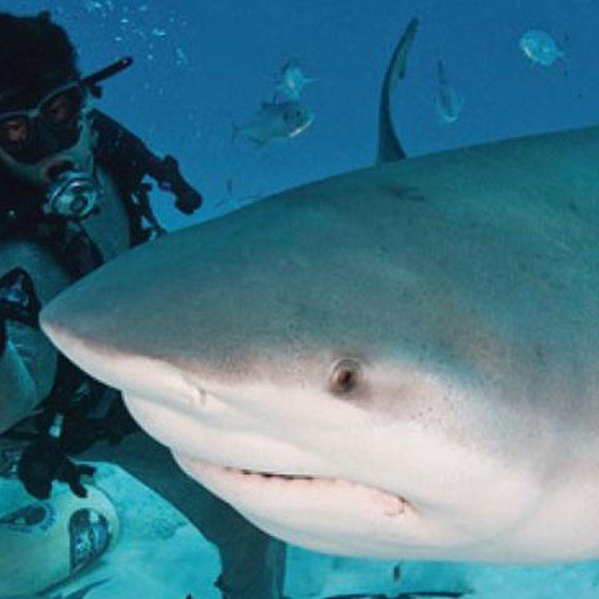 A La Réunion, La Présence De Requins N'est Pas Du Tout tout Tous Les Jeux De Requin