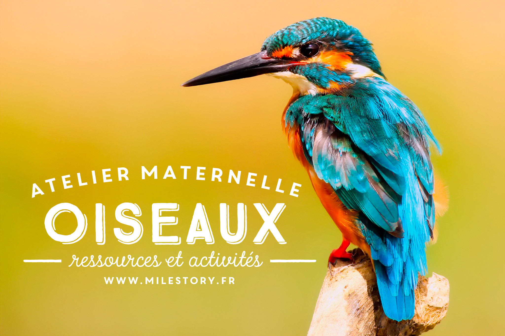 Activités Maternelle Oiseaux + Cartes Nomenclature Oiseaux pour Jeux De Oiseau Gratuit
