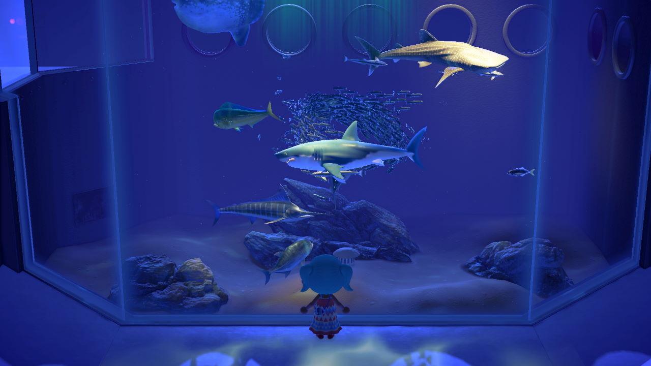 Animal Crossing: New Horizons – Comment Attraper Des Requins à Requin Jeux Gratuit