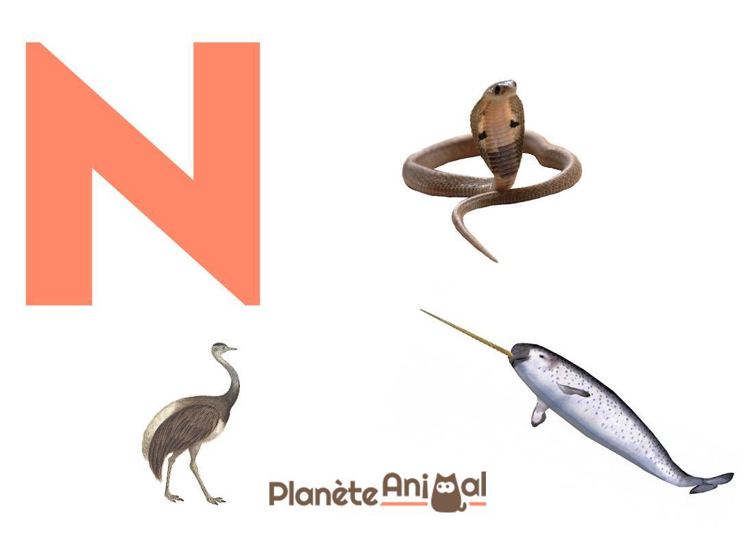 Animal Qui Commence Par N - En Français Et En Anglais pour Animaux Qui Hivernent