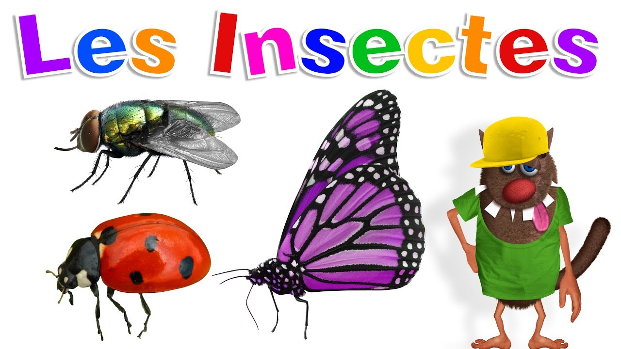 Apprendre Aux Enfants Les Insectes (Learn Insects For Kids - Serie 01) serapportantà Imagier Insectes