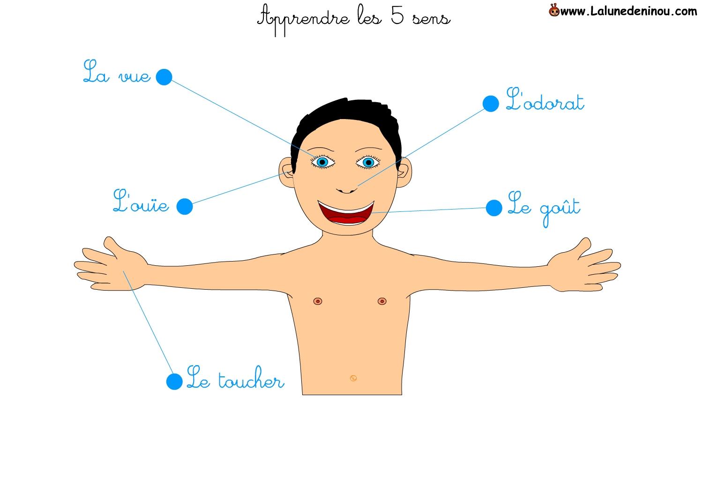 Apprendre Les 5 Sens - Jeux Pour Enfants Sur Lalunedeninou concernant Jeu Des Cinq Sens