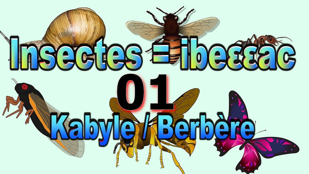 Apprendre Les Insectes En Kabyle Français Anglais Arabe. Vidéo 01 avec Imagier Insectes
