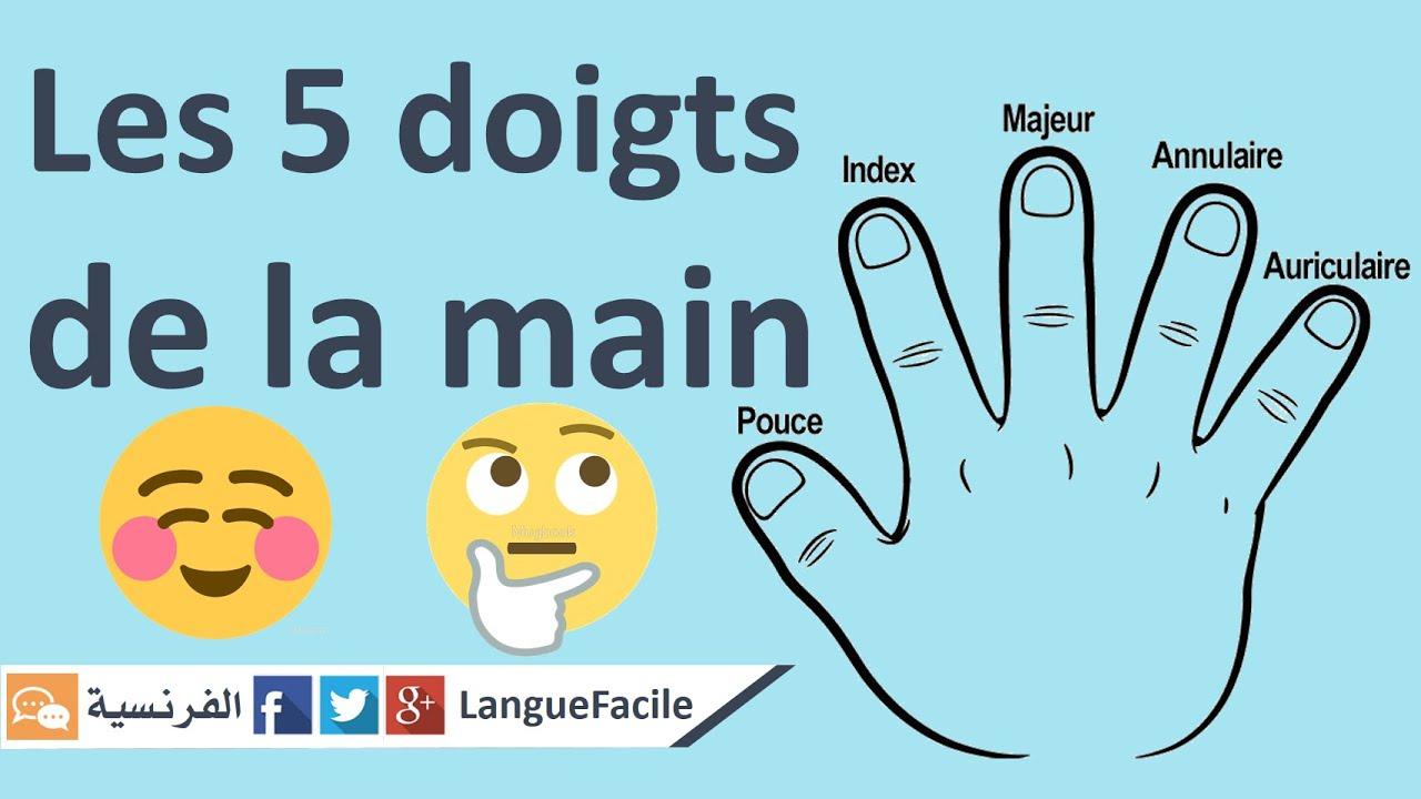 Apprendre Les Noms Des Doigts De La Main / Langue Facile encequiconcerne Nom Des Doigts De La Main