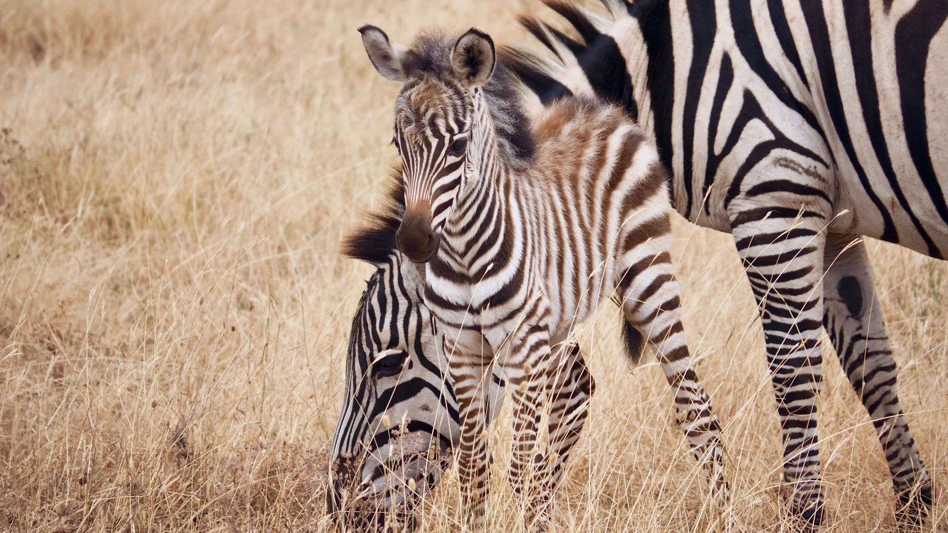 Apprends Le Nom Des Mamans Et Des Bébés Animaux - Anigaïdo tout Femelle De L Éléphant Nom