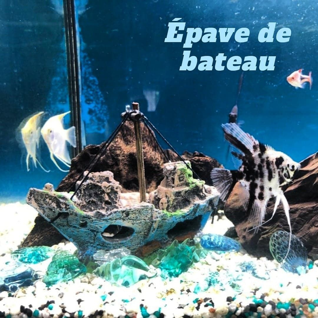 Aquarium #bateau #petit #pour Petit Bateau Pour Aquarium tout Site Pour Tout Petit