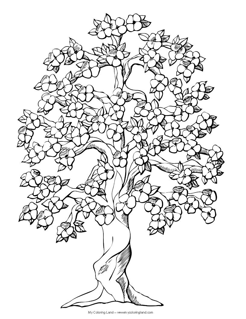 Arbre #68 (Nature) – Coloriages À Imprimer encequiconcerne Arbre A Colorier Et A Imprimer
