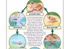 Bac Sensoriel : Le Cycle De Vie De La Grenouille - Add Fun dedans Le Cycle De Vie De La Grenouille