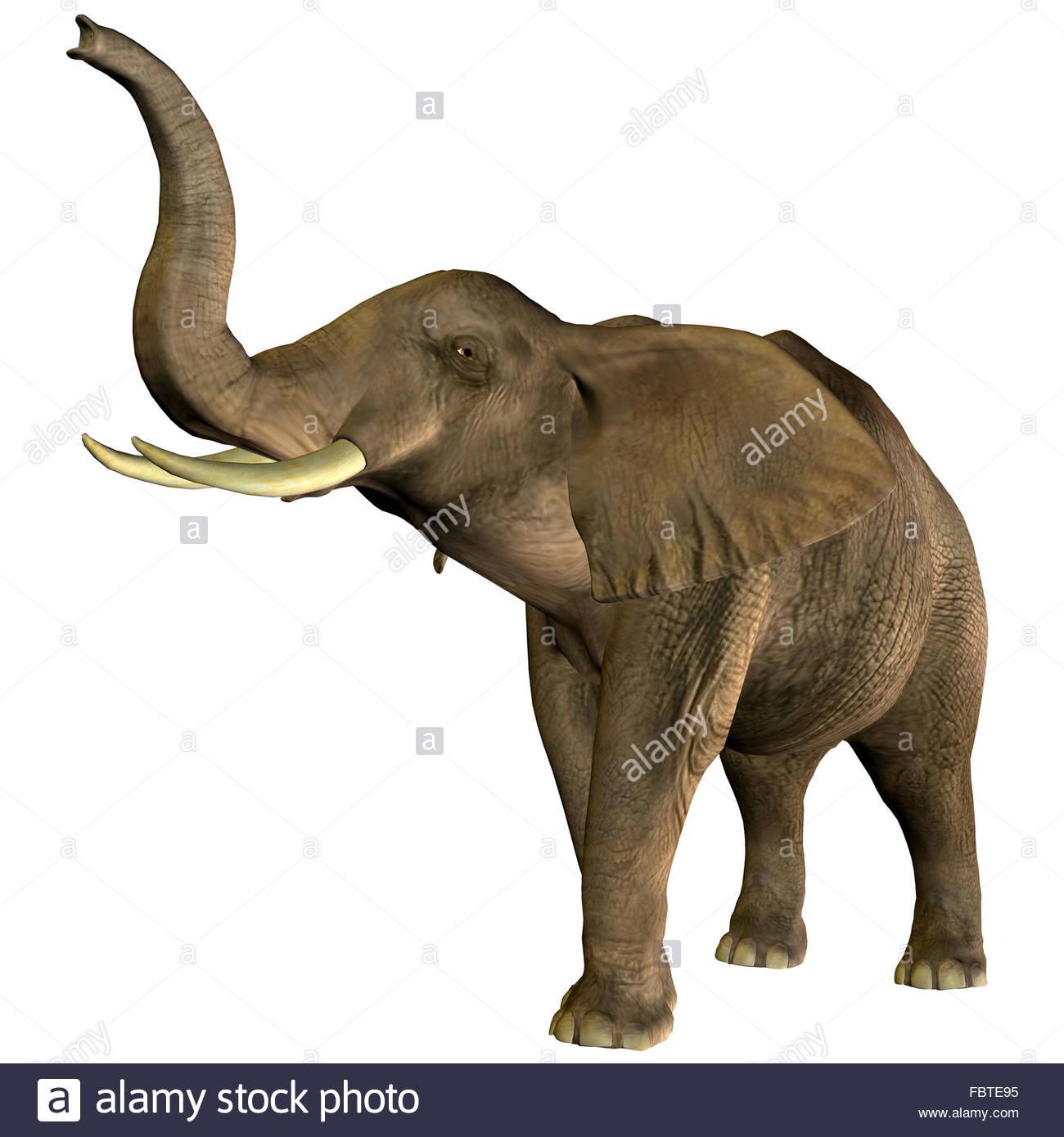 Barrissement Photos & Barrissement Images - Alamy encequiconcerne Barrissement Elephant