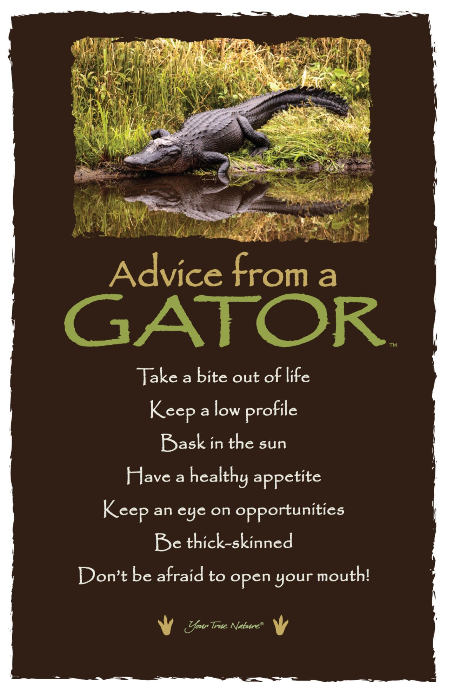 "Be Thick-Skinned."" Advice From A Gator 
