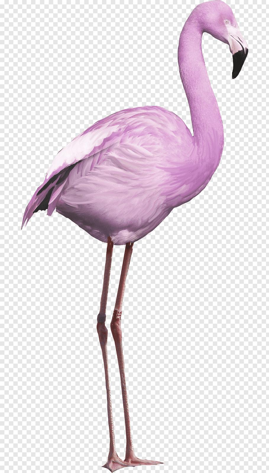 Bird Greater Flamingo, Bird Png   Pngwave concernant Pixel Art Flamant Rose