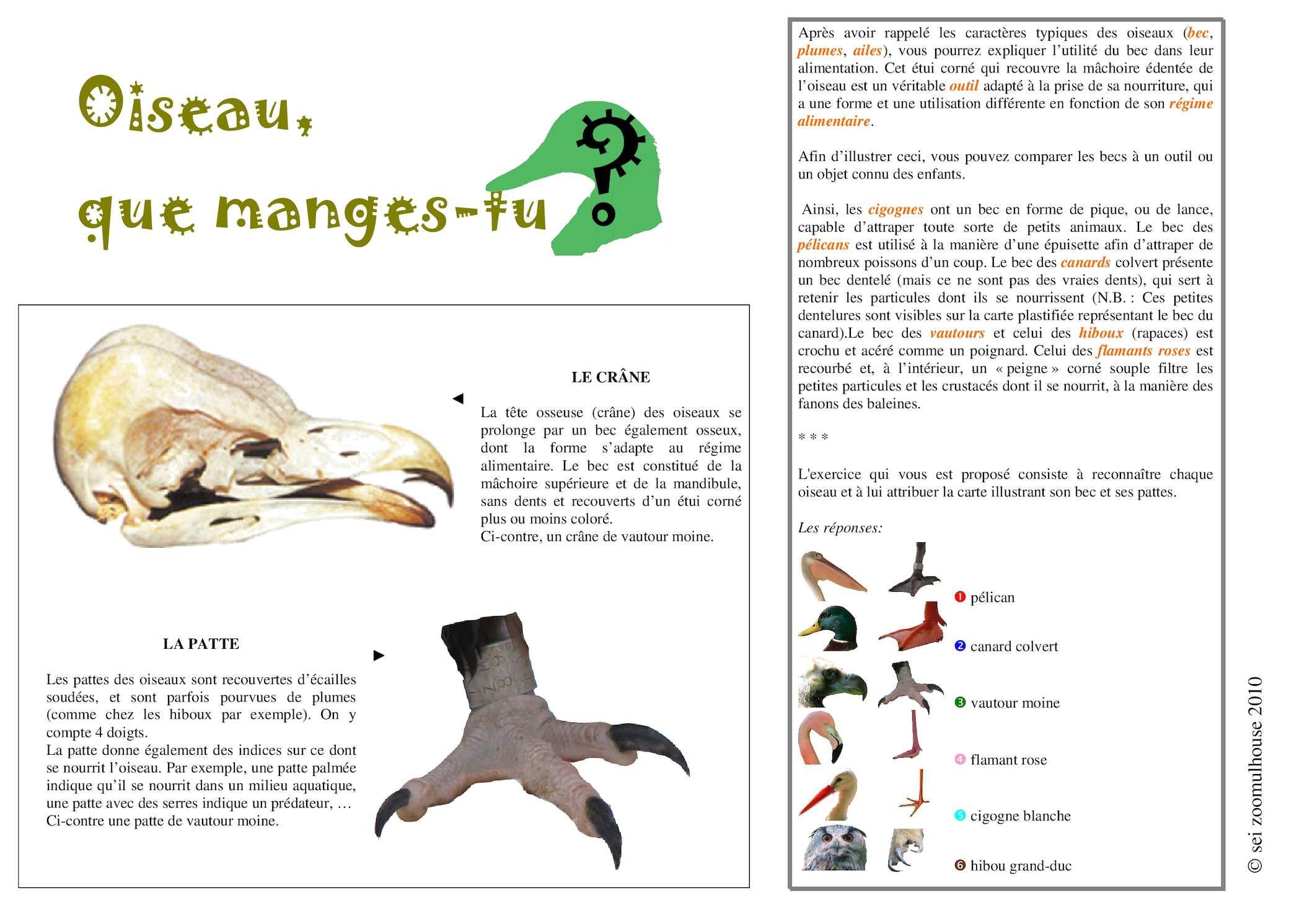 Calaméo - Oiseau Que Manges Tu - Panneau-Jeu destiné Jeux De Oiseau Gratuit