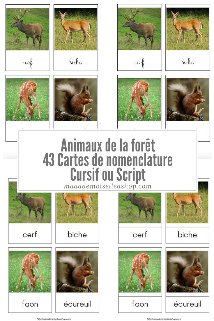 Cartes De Nomenclature - Animaux De La Forêt (43 Cartes + concernant Animaux Foret Maternelle