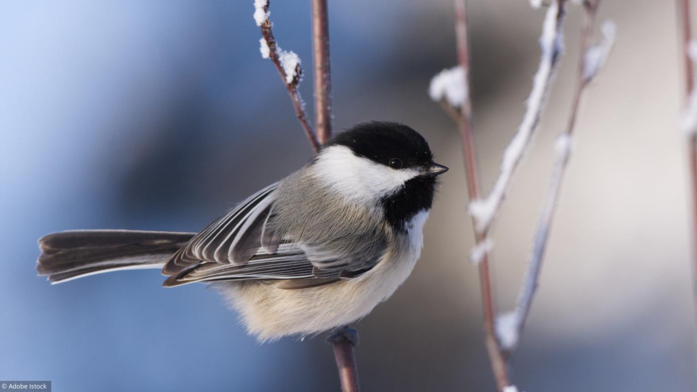 Ce Week-End, Comptez Les Oiseaux! avec Jeux De Oiseau Gratuit