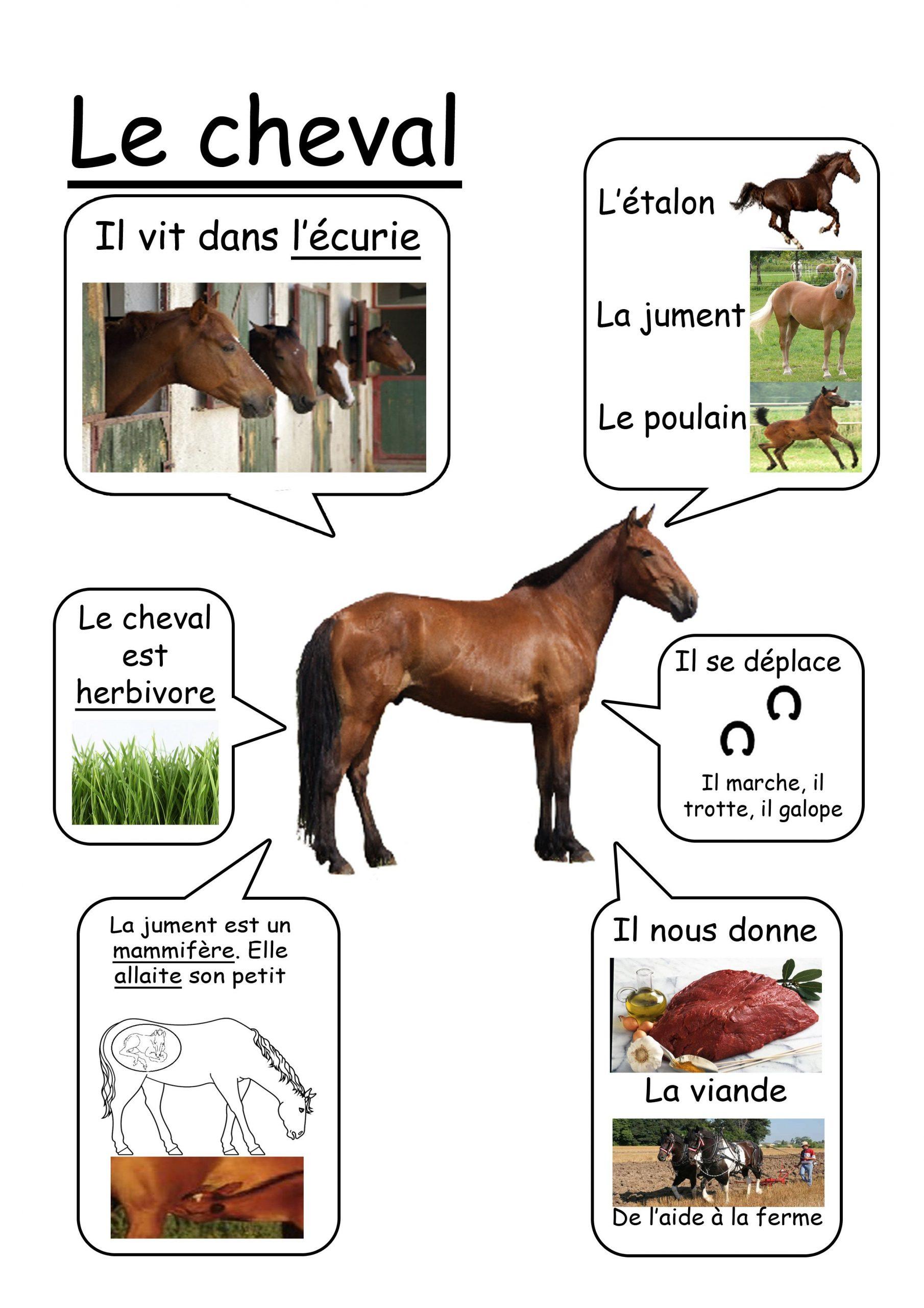 Cheval - Animaux De La Ferme   Animaux De La Ferme à Imagier Animaux De La Ferme