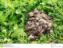 Colline De Taupe Photo Stock. Image Du Arbre, Herbe, Nature tout Arbre A Taupe