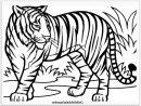 Coloriage Bebe Tigre #dessinbebe In 2020 | Lion Coloring pour Coloriage Bébé Tigre