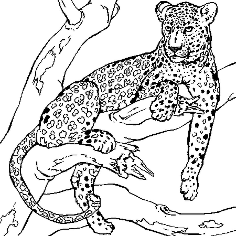 Coloriage Léopard Couché Sur Une Branche D'arbre En Ligne tout Arbre A Colorier Et A Imprimer
