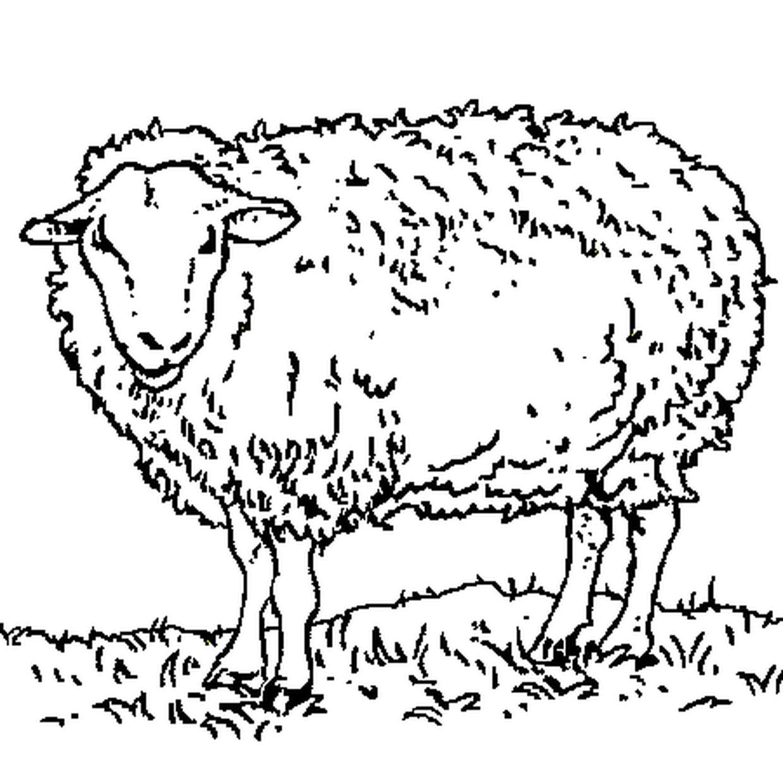 Coloriage Mouton En Ligne Gratuit À Imprimer serapportantà Mouton À Colorier
