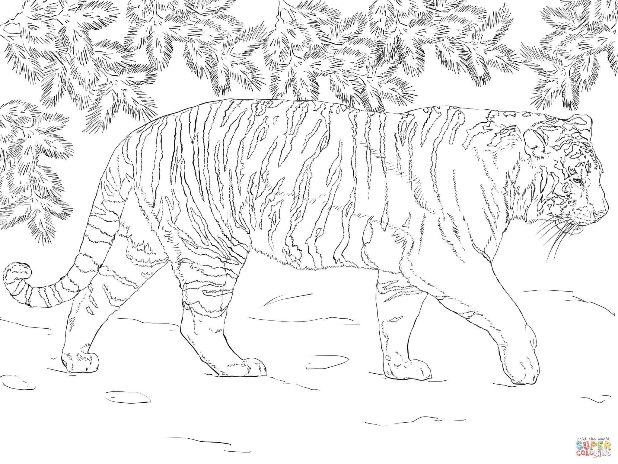 Coloriage - Tigre De Sibérie | Coloriages À Imprimer Gratuits avec Coloriage Bébé Tigre