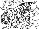 Coloriage Tigre En Ligne Gratuit À Imprimer dedans Coloriage Bébé Tigre