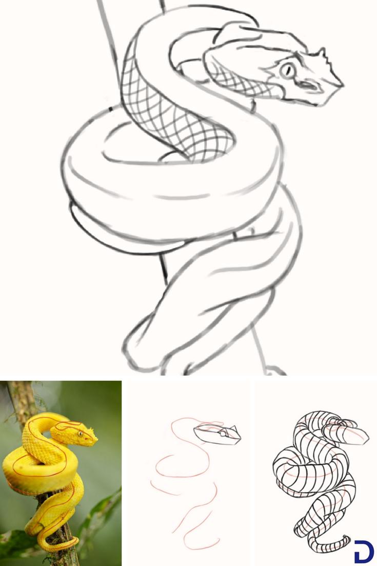 Comment Dessiner Un Serpent | Dessin Serpent, Dessin Et intérieur Image De Dessin A Reproduire