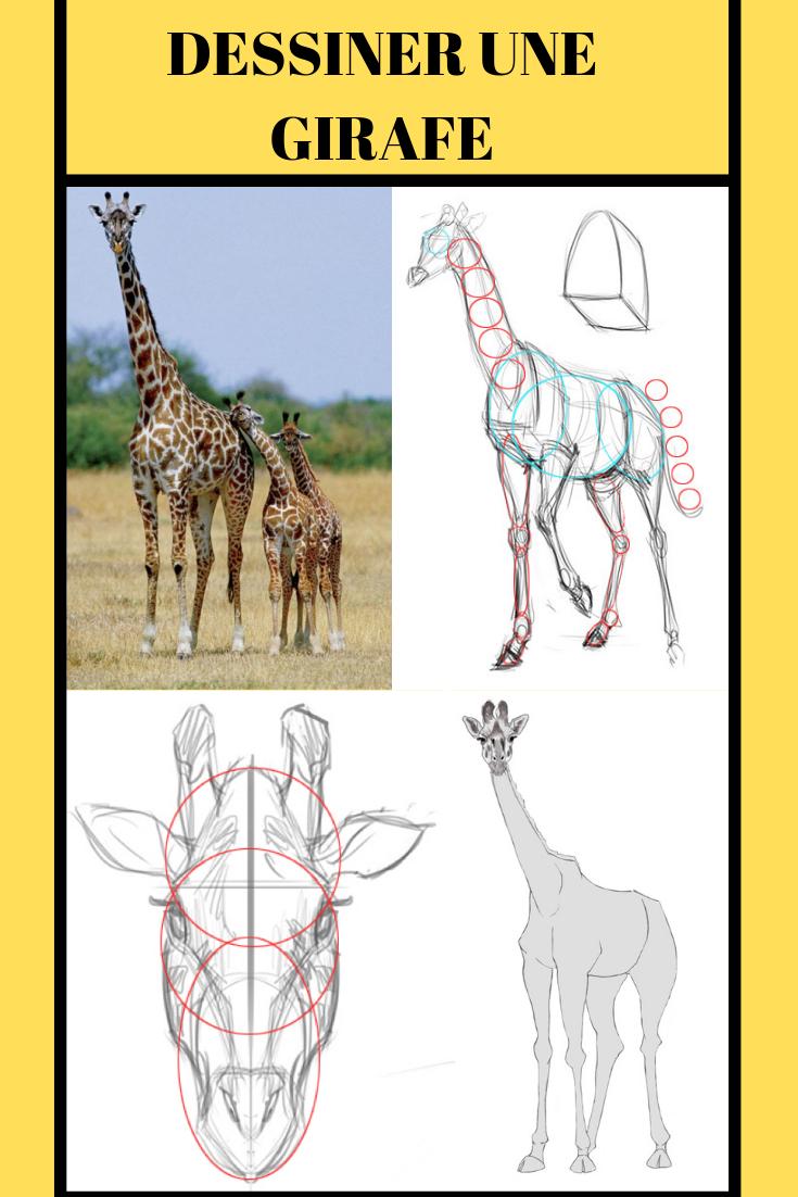 Comment Dessiner Une Girafe | Comment Dessiner Une Girafe encequiconcerne Apprendre A Dessiner Des Animaux Facilement Et Gratuitement
