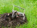 Comment Éviter Les Taupes Dans Son Jardin ? pour Arbre A Taupe