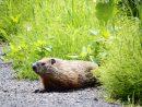 Comment Survivent Les Animaux En Hiver? - Comité Zip Du Lac dedans Animaux Qui Hivernent