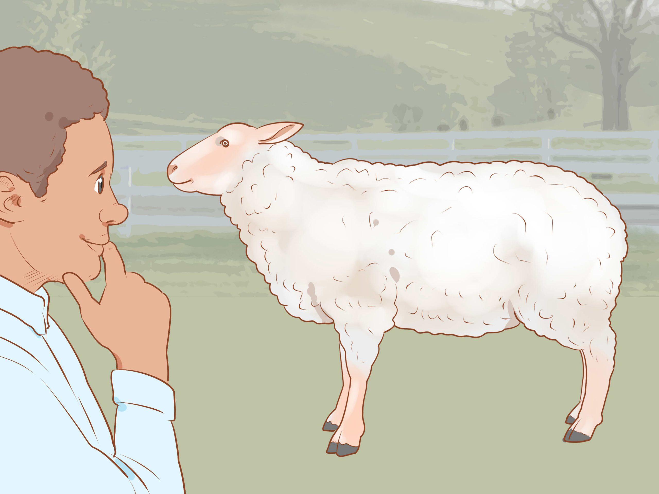 Comment Tondre Un Mouton (Avec Images) - Wikihow intérieur Différence Entre Brebis Et Mouton
