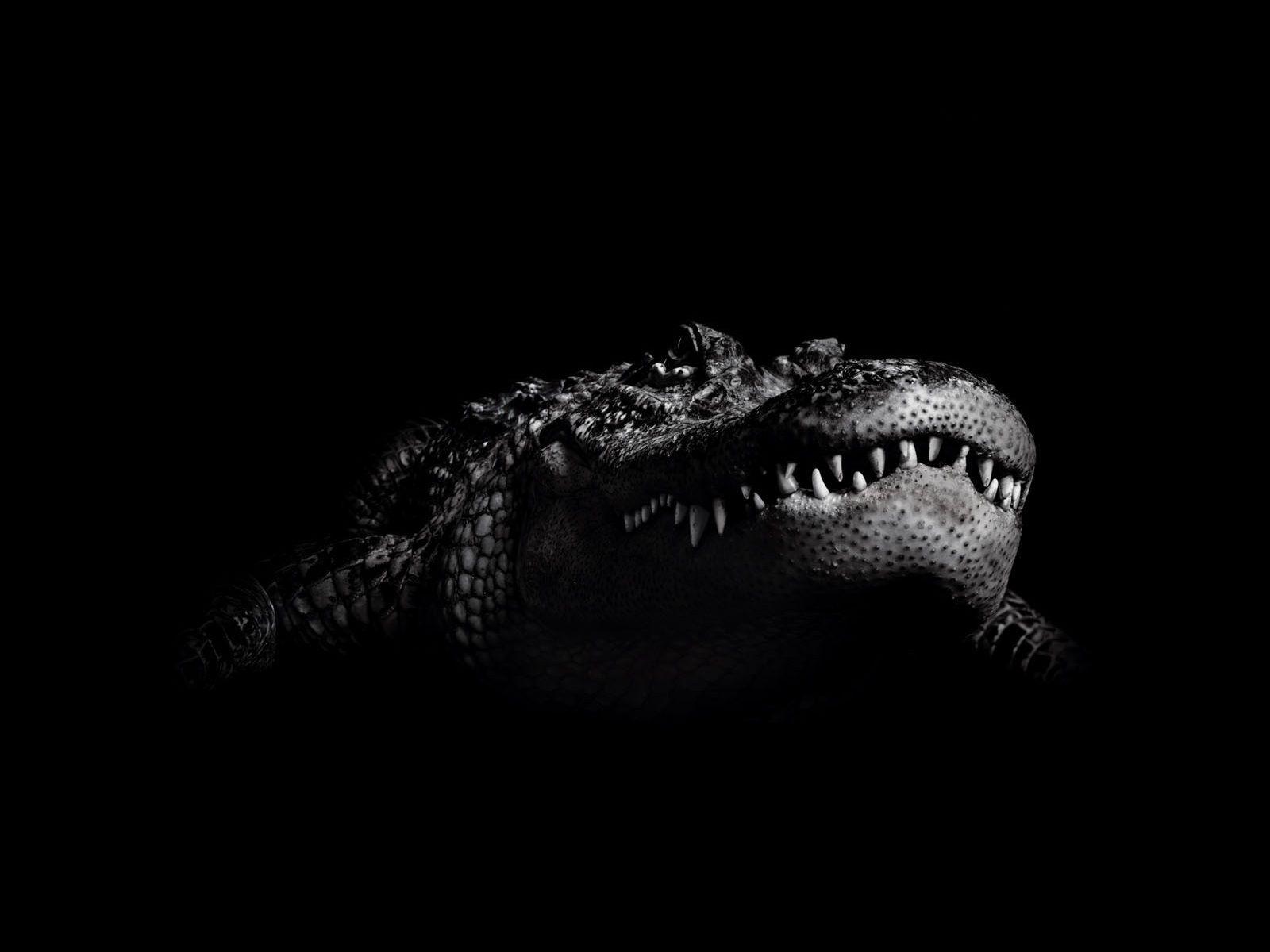 Crocodile Hd Background destiné Mots Gator