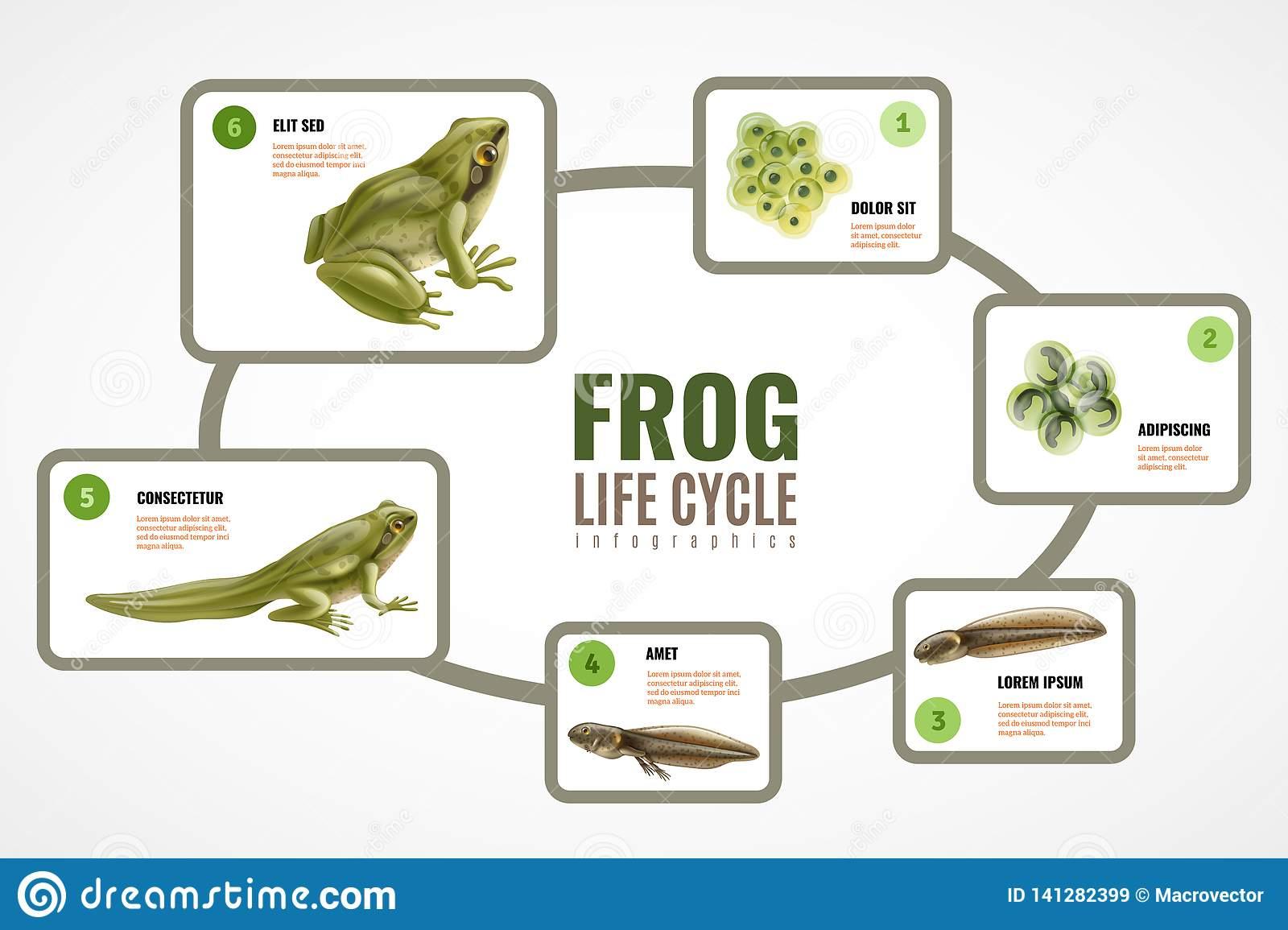 Cycle De Vie De Grenouille Graphics Illustration De pour Cycle De Vie Grenouille