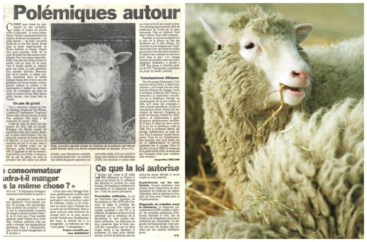 Dans Le Retro. Il Y A 20 Ans, Les Premiers Bêlements Du serapportantà Différence Entre Brebis Et Mouton