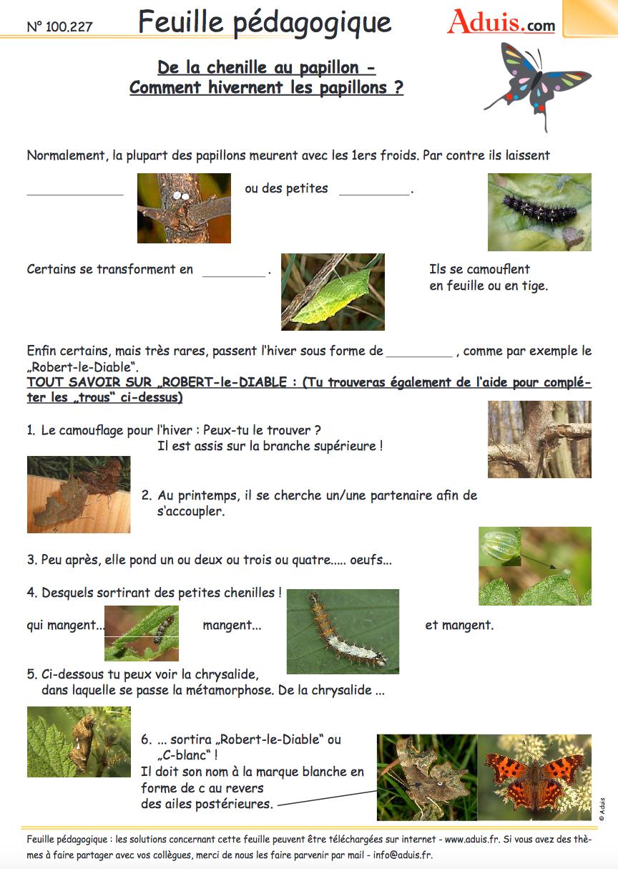 Des Dizaines De Fiches Pédagogiques (Les Insectes) À avec Imagier Insectes