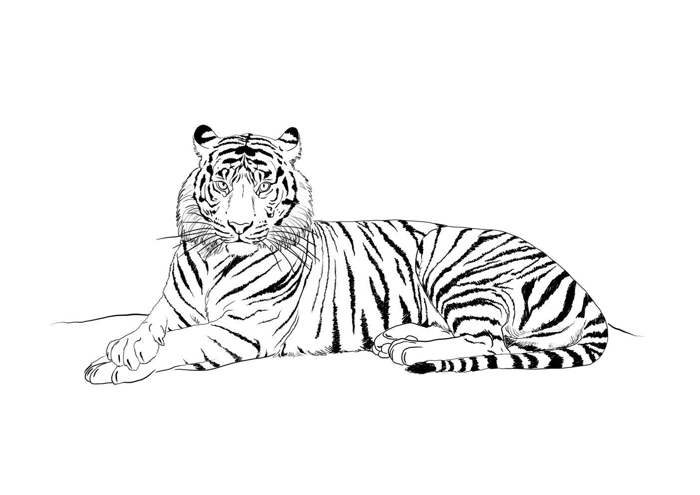 Dessin À Colorier: Tigre (Animaux) #63 - Coloriages À dedans Coloriage Bébé Tigre