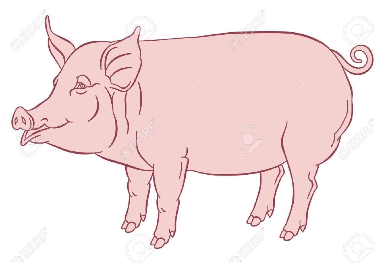 Dessin À La Main Couleur De Porc Domestique - Illustration Vectorielle destiné Dessin De Cochon En Couleur