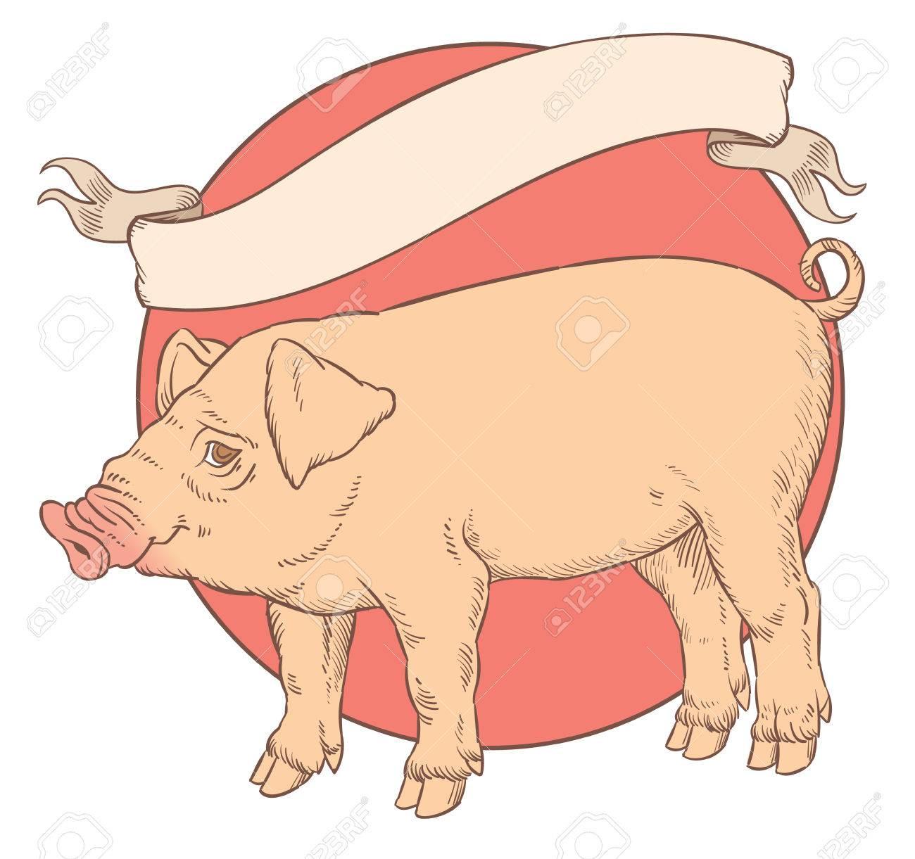 Dessin À La Main En Couleur De Cochon Domestique Avec Bandeau Ruban Vintage  Pour Étiquette-Illustration Vectorielle concernant Dessin De Cochon En Couleur