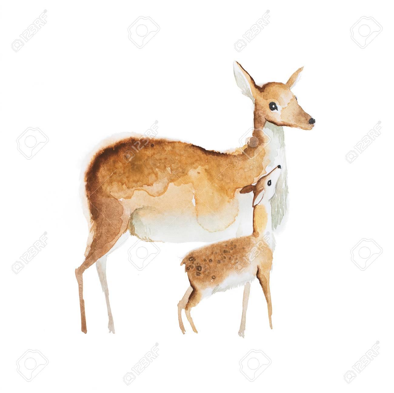 Dessin Aquarelle De Mère Cerf Et Un Faon tout Faon Dessin