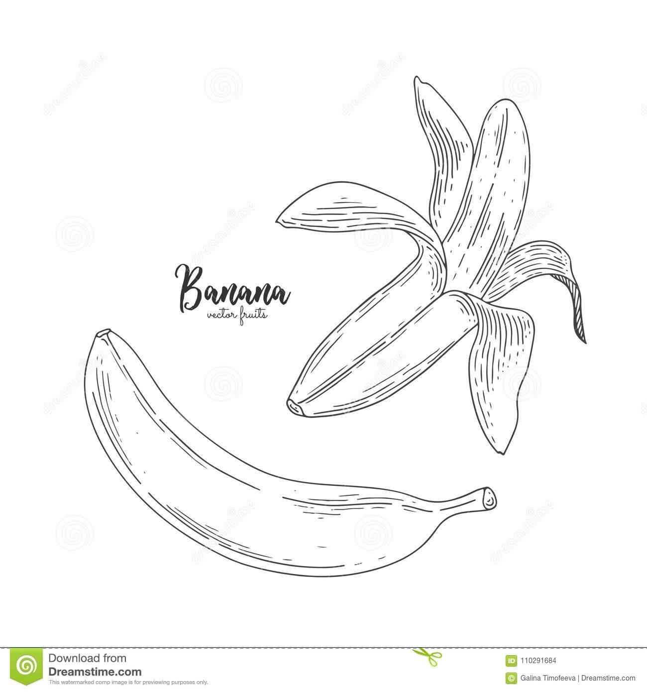 Dessin De Banane Partiellement Épluchée D'isolement Sur Le à Dessiner Une Banane