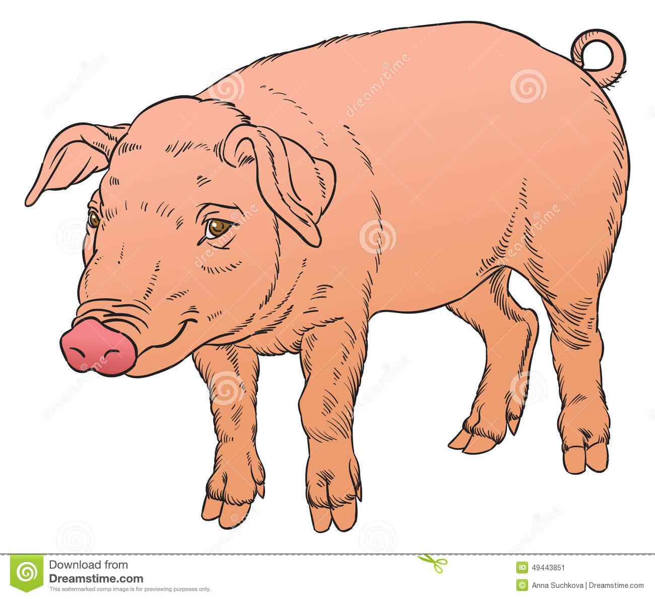 Dessin De Main De Couleur De Porc Domestique Illustration De dedans Dessin De Cochon En Couleur