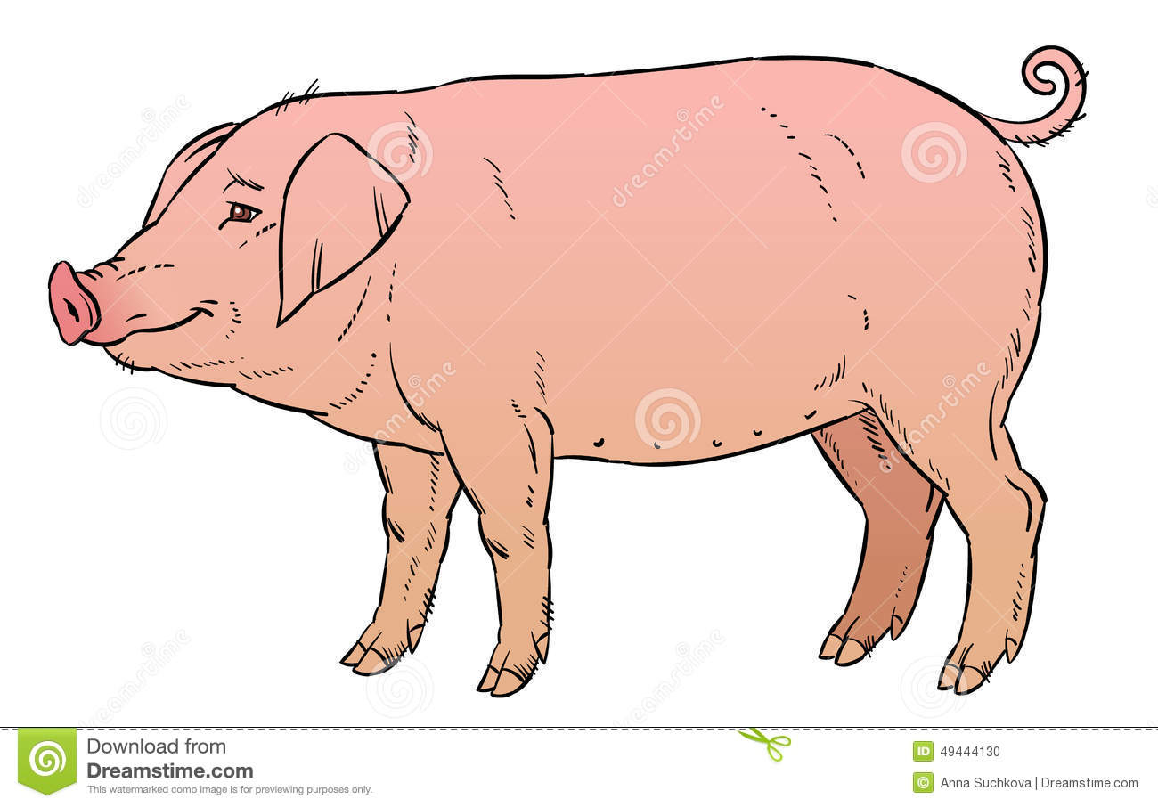 Dessin De Main De Couleur De Porc Domestique Illustration De serapportantà Dessin De Cochon En Couleur