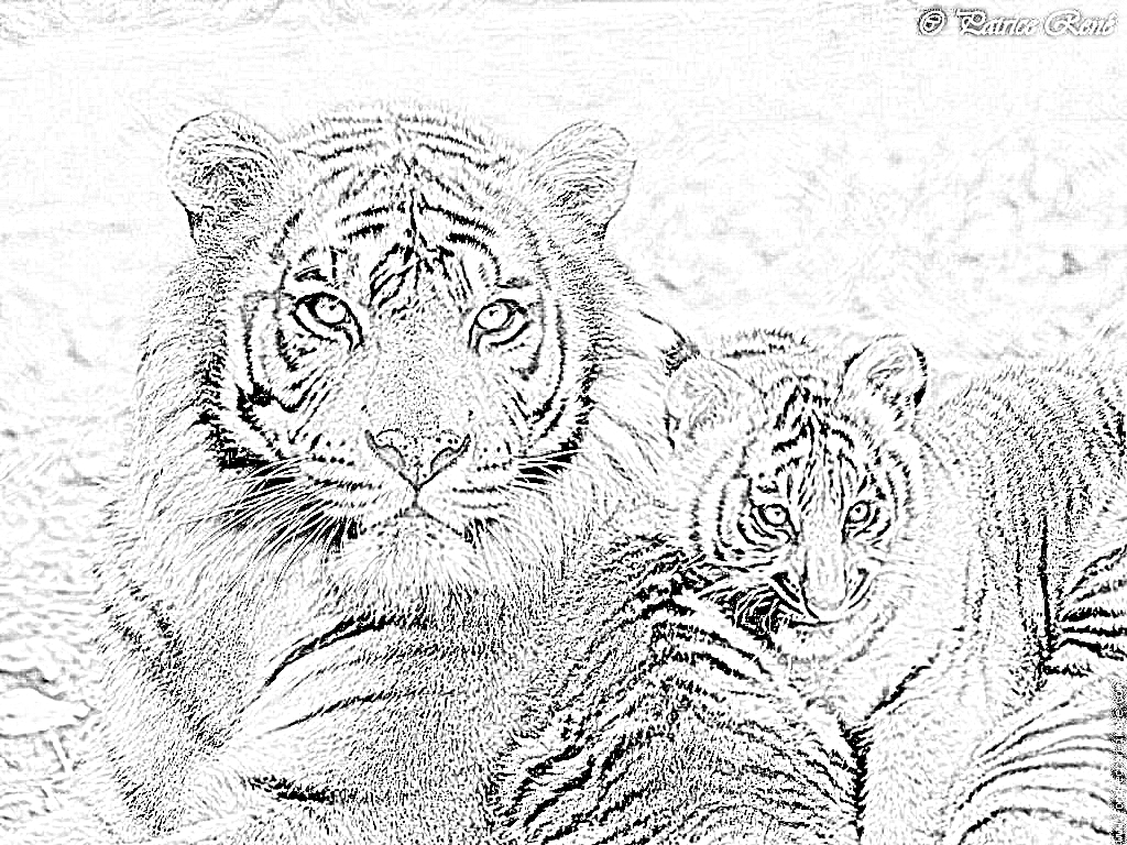 Dessin Tigre Bébé avec Coloriage Bébé Tigre