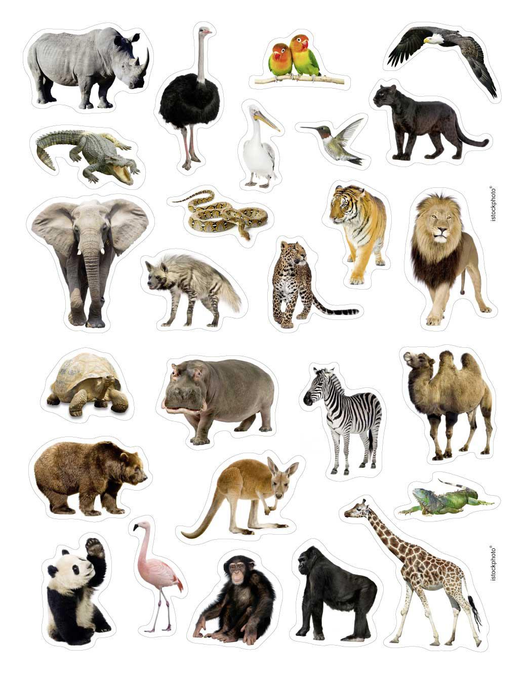 Dessins En Couleurs À Imprimer : Animaux Carnivores, Numéro dedans Image D Animaux A Imprimer En Couleur