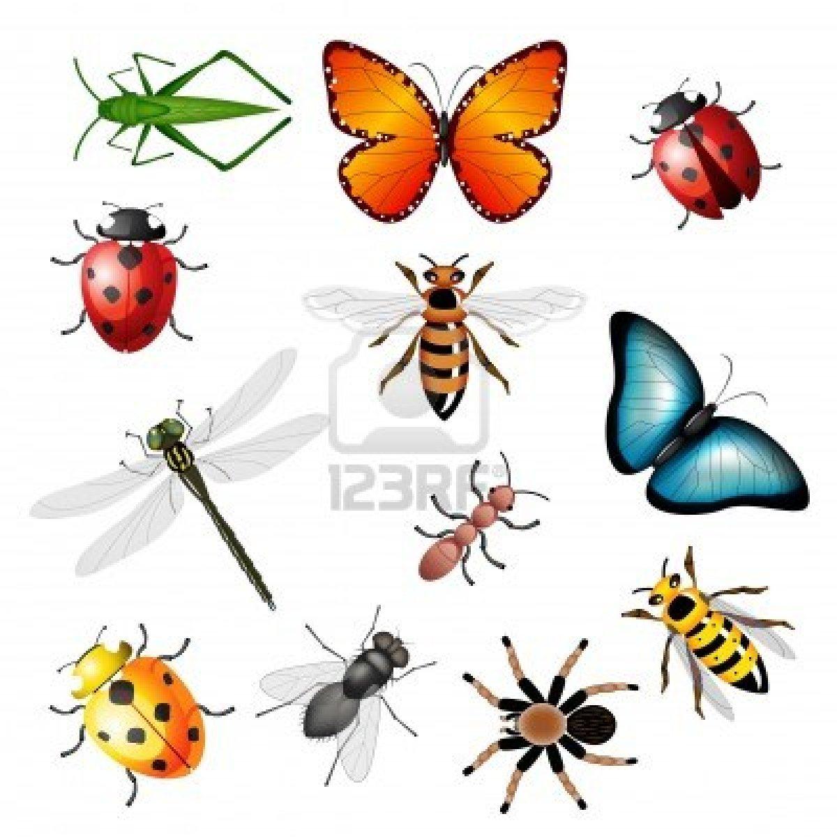 Dessins En Couleurs À Imprimer : Insectes, Numéro : 165826 concernant Image D Animaux A Imprimer En Couleur