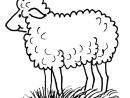 Dessins Gratuits À Colorier - Coloriage Mouton À Imprimer intérieur Mouton À Colorier