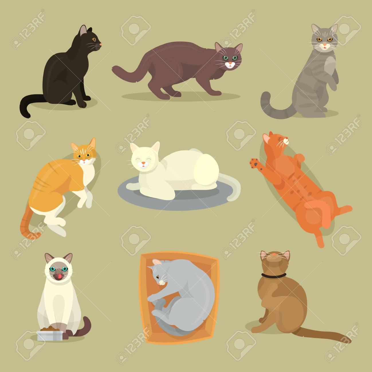 Différentes Races De Chats Mignons Kitty Animal De Compagnie Dessin Animé  Mignon Jeu D'illustration De Caractère Animal. Mammifère Ami Humain Chat avec Jeux De Dessin De Chat