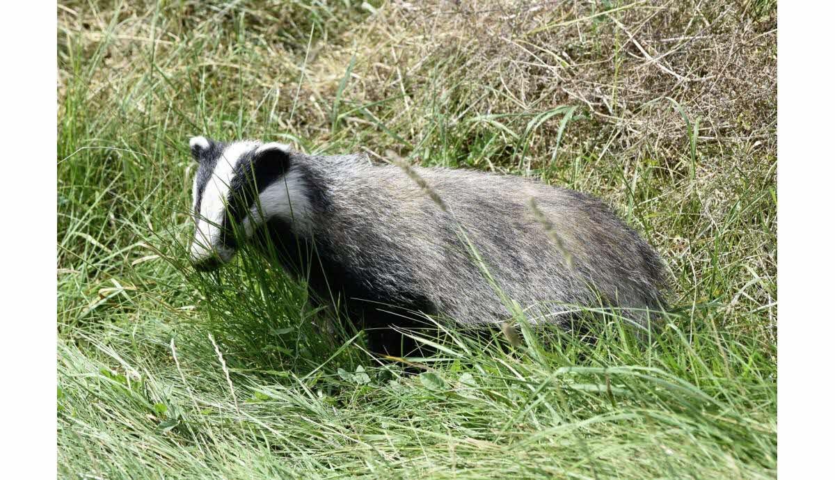 Edition Besançon   Le Blaireau Hiverne, La Marmotte Hiberne concernant Animaux Qui Hivernent